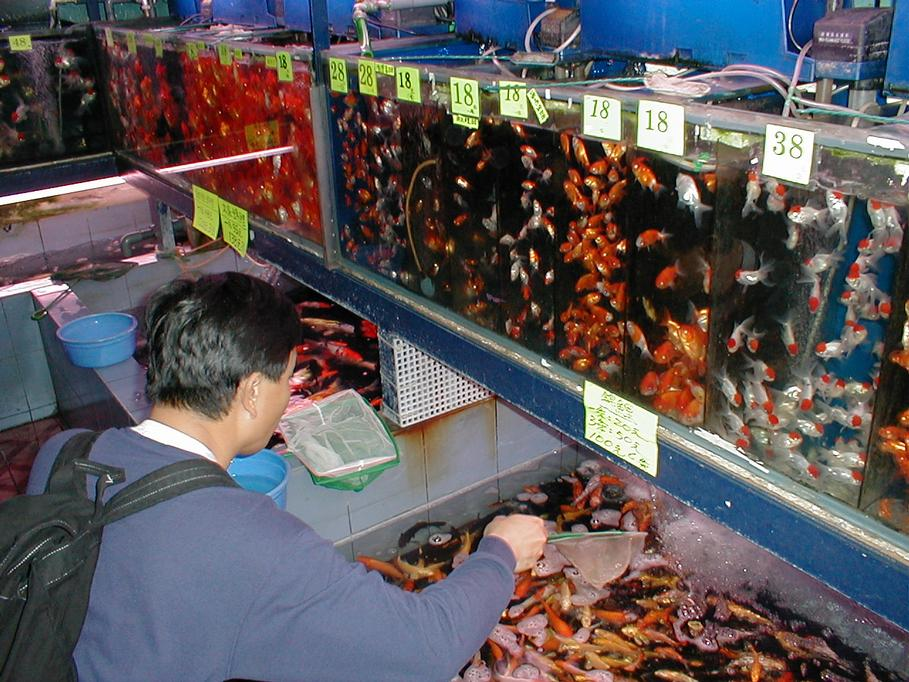 hong kong chocolate market Hong kong: a trade hub in asia offering strong opportunity for imported agrifoods   by increases in meal replacement products and chocolate confectionery.